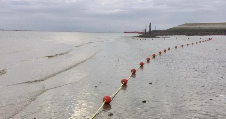 Drijflijn bij strand Perkpolder